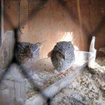 Postavte si klec pro ptáky z hliníkových profilů